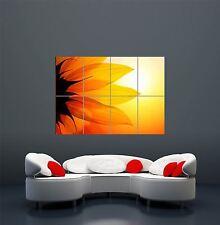 PHOTOGRAPH NATURE BRIGHT SUNFLOWER PETALS SUN GIANT ART POSTER PRINT  WA452