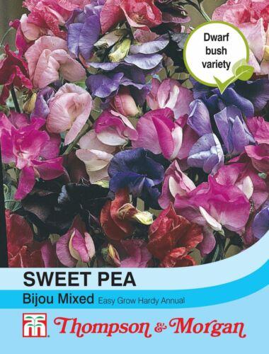 20 Semi Thompson /& Morgan-FIORI-Sweet Pea Bijou Misto