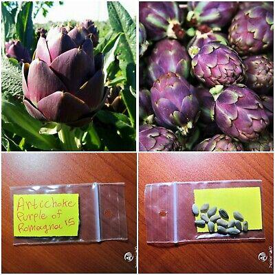 Unique Rare Variety Artichoke /'/'Purple Of Romagna/'/' ~15 Top Quality Seeds