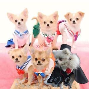 Simple Pomeranian Anime Adorable Dog - s-l300  Perfect Image Reference_381069  .jpg
