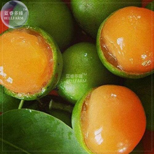 10 seeds Lemon Sweet Spanish Lime Tree DIY Fruit Seeds E4375U