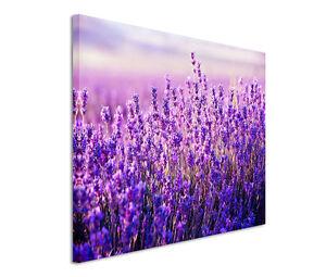 120x80cm Leinwandbild auf Keilrahmen Landschaft Blumenwiese Lavendel Sommer