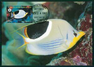 Dynamique Micronesia Mk 1997 Faune Poisson Tropical Fish Pesce Brais Maximum Carte Mc En33-afficher Le Titre D'origine MatéRiau SéLectionné