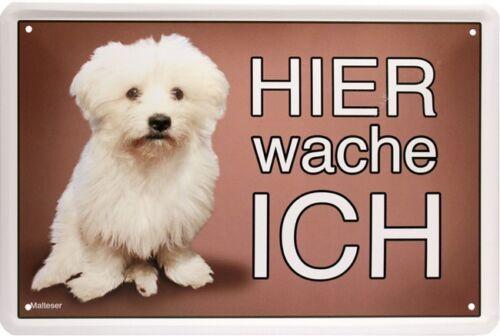 Hier wache ich Malteser Hund Dog 20x30 cm Blechschild 1566