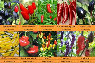 10 Sorten Schärfe 7 MASSENTRÄGER Gewürzchili Chili Pepperoni Samen