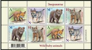 2020-Belarus-Wild-Baby-animals-Fox-Volf-Cub-Bear-Lynx-block