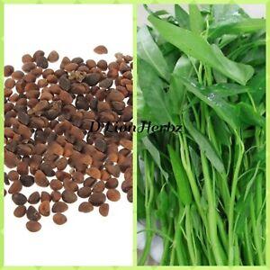 50-GRAM-1000-seeds-cultivate-Garden-Vegetable-Organic-Plant-Fruit-Delicious
