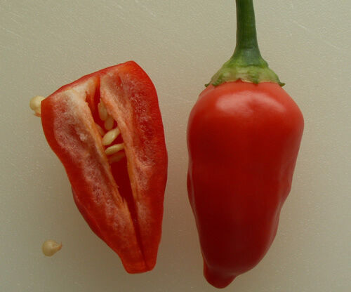 Hot Little Berry-like Chilli from Peru 10 Seeds A Rare Inca Berry Chilli