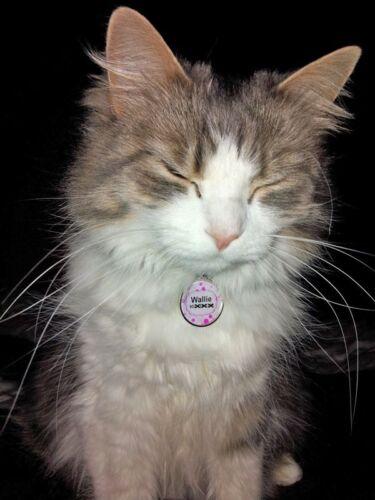 Service dog CUSTOM Emotional Support Animal BABY BLUE BLACK pet dog cat ID ESA