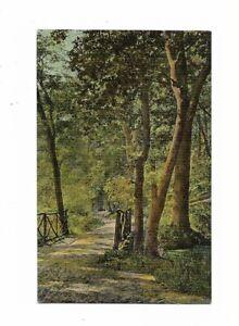AK-Kuenstlerkarte-von-1912-034-Waldweg-034-Verlag-T-H-L-034-Theochrom-034