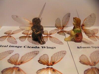 OOAK Fairy Deep cicada wings transparency sheet 12 pairs