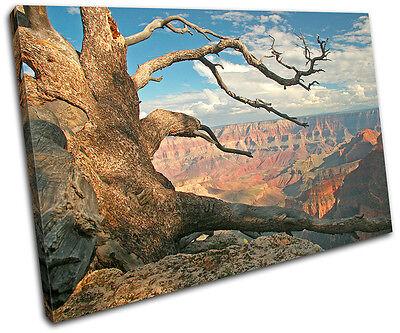 Grand Canyon Tree Landscapes SINGLE CANVAS WALL ART Picture Print VA