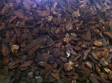 Pollywog Coarse Bark - 5lt - Orchid Pine Chips Substrate Reptile Frog Vivarium