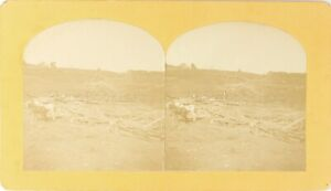 Stereo-Cavalli-Albero-Legno-Teschio-Foto-Stereo-Vintage-Albumina-Ca-1900