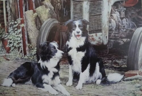 """2 Collie Dogs on the farm greeting card-/"""" Partners/"""" Black and White//"""