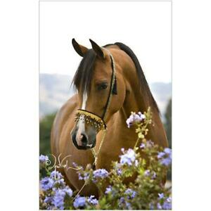 5D-DIY-Full-Drill-Diamond-Painting-Horse-Flowers-Cross-Stitch-Embroidery