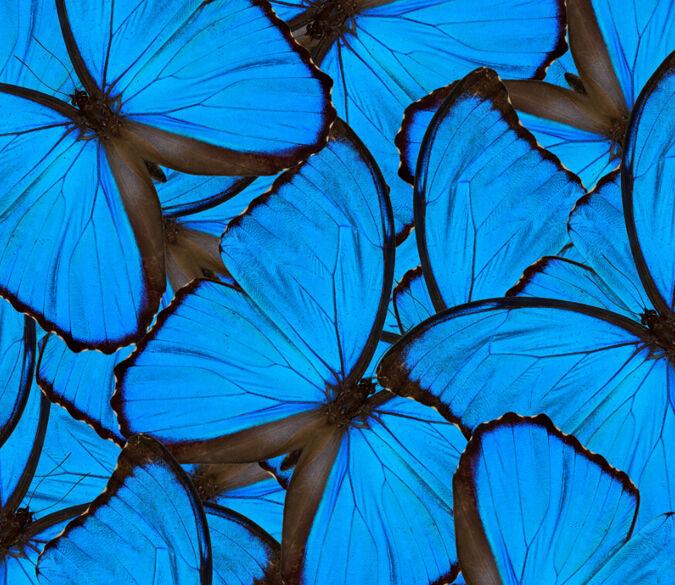 3D Blau Butterflies 1 Wall Paper Wall Print Decal Wall Deco Indoor Wall Murals