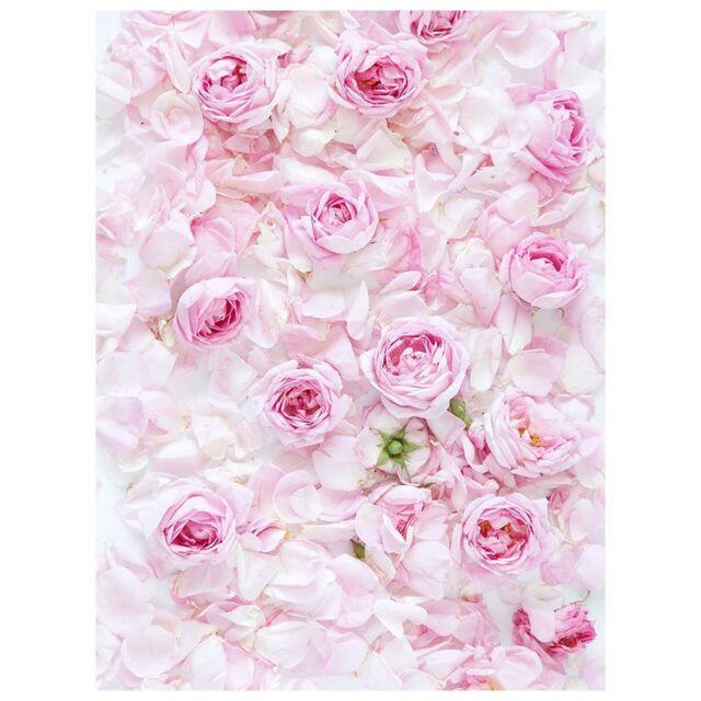 5x7ft photography backdrop pink rose flower wall wedding love baby 5x7ft photography backdrop pink rose flower wall wedding love baby shower f j7p5 mightylinksfo