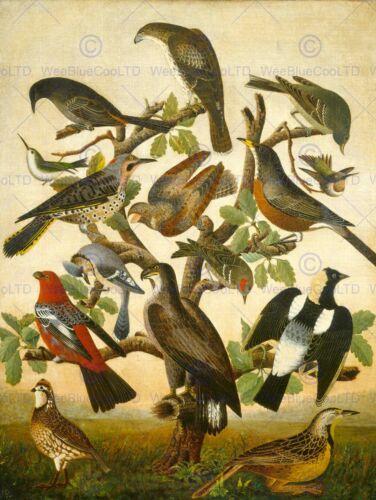 AMERICAN 19TH CENTURY BIRDS OLD ART PAINTING POSTER PRINT BB4828B