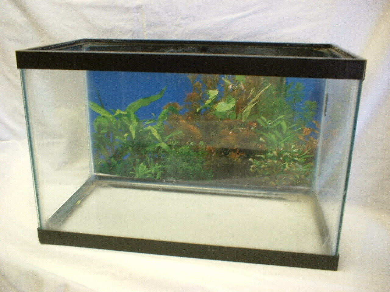 5 1 2 Gallon Glass Aquarium, Used
