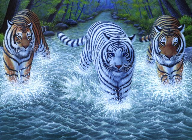 Malen Nach Zahlen Pjl 34 Drei Tiger