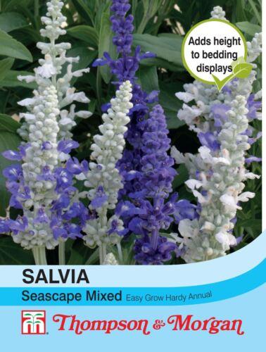 Thompson /& morgan-fleurs-salvia paysage marin mixte 50 graines