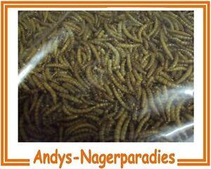 5kg Mehlwürmer getrocknet Vogelfutter Reptilienfutter Nagerfutter