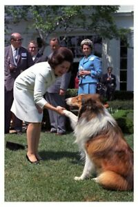 Details about 1967 Silver Halide Photo Of First Lady Bird Johnson Shaking  Paws With Lassie Dog