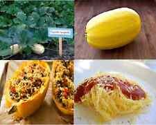Winter Squash Heirloom SPAGHETTI Squash 50 SEEDS Pasta Alternative Healthy