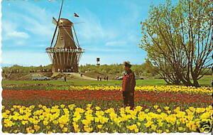 Tulip Time Holland Michigan Windmill Island De Zwaan Vintage Postcard