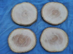 13-14-034-x1-1-4-1-5-034-Oak-Slice-Fresh-Cut-Live-Edge-Lot-of4-Wedding-Charger-Craft-4A
