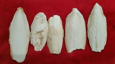 "Pet Supplies Other Bird Supplies Cuttlefish Bone Cockatiel Parakeet Budgie 6-9"" Pieces"