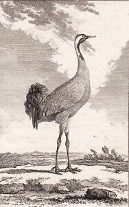 Gravure-XVIIIe-La-Grue-Gruidae-Crane-Kraniche-1770