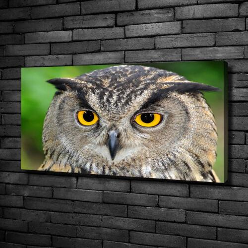 Leinwandbild Kunst-Druck 100x50 Bilder Tiere Eule