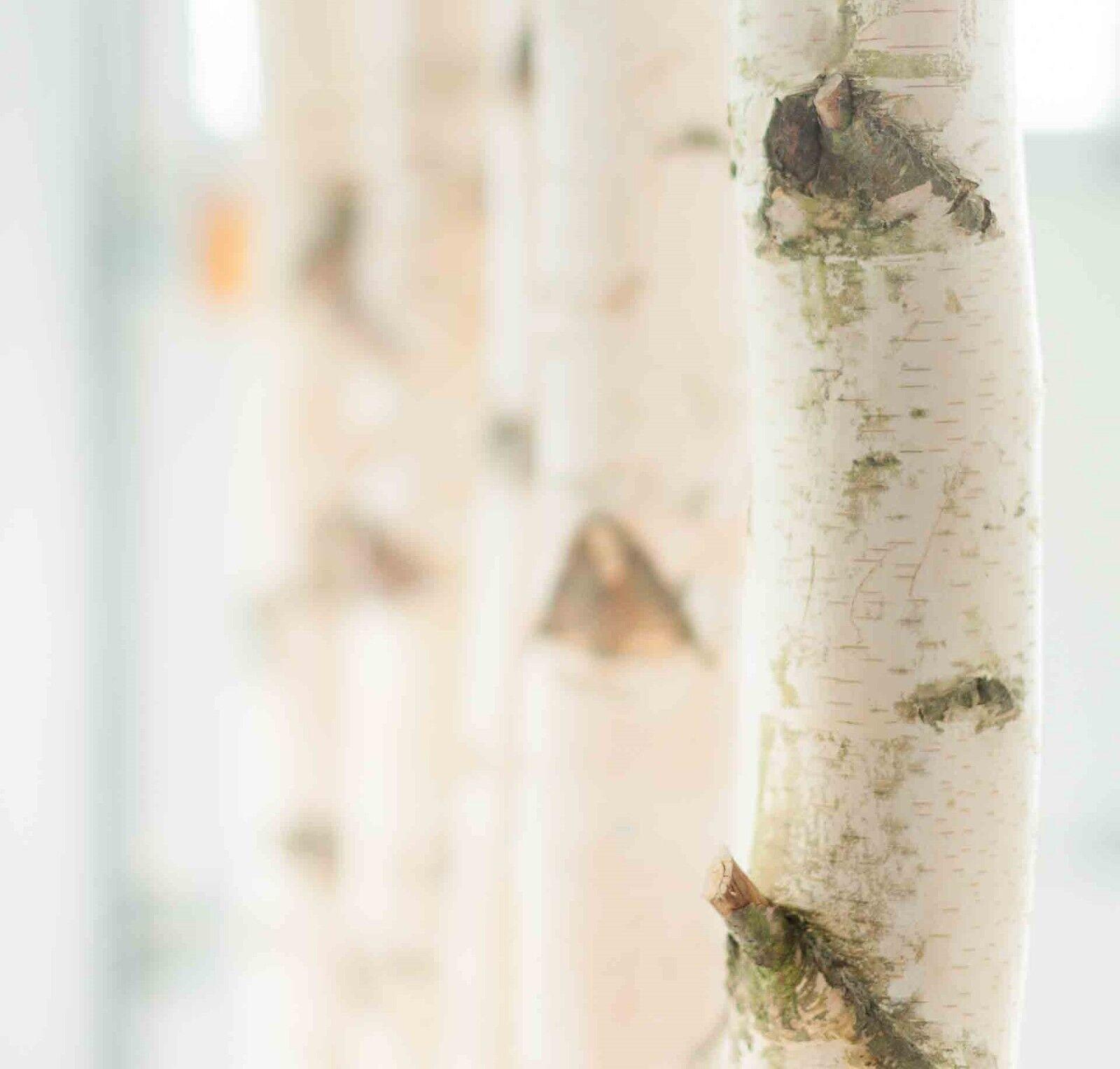 Weißer Birkenstamm mit Stellfuß 3m - Birkendoc   Deko   Raumteiler & vieles mehr