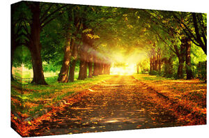 Image Is Loading Sun Beam In Forest Landscape Canvas Wall Art