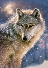 Puzzle Castorland 500 Teile - Lone Wolf (56985)