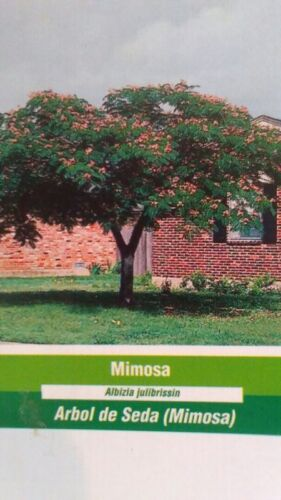 4/'-5/' Mimosa Tree Live Flowering Shade Trees Healthy Home Landscaping Plants
