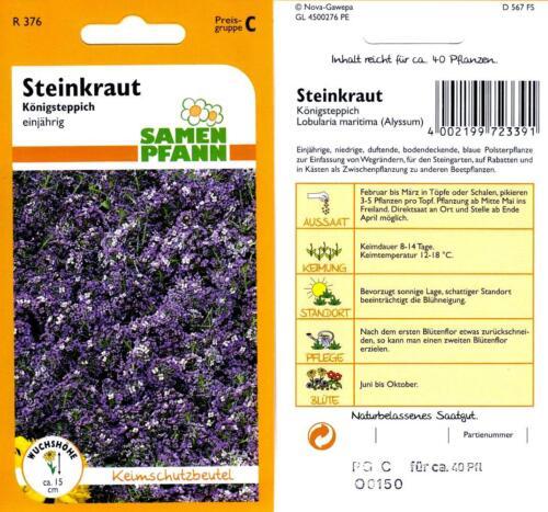 bodendeckende Polsterstaude Steinkraut Königsteppich Blumen Samen Saatgut