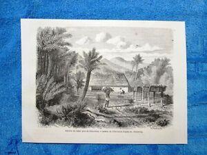 Gravure-Annee-1861-Recolte-du-tabac-Villa-Rica-Georgie-Raccolta-del-tabacco