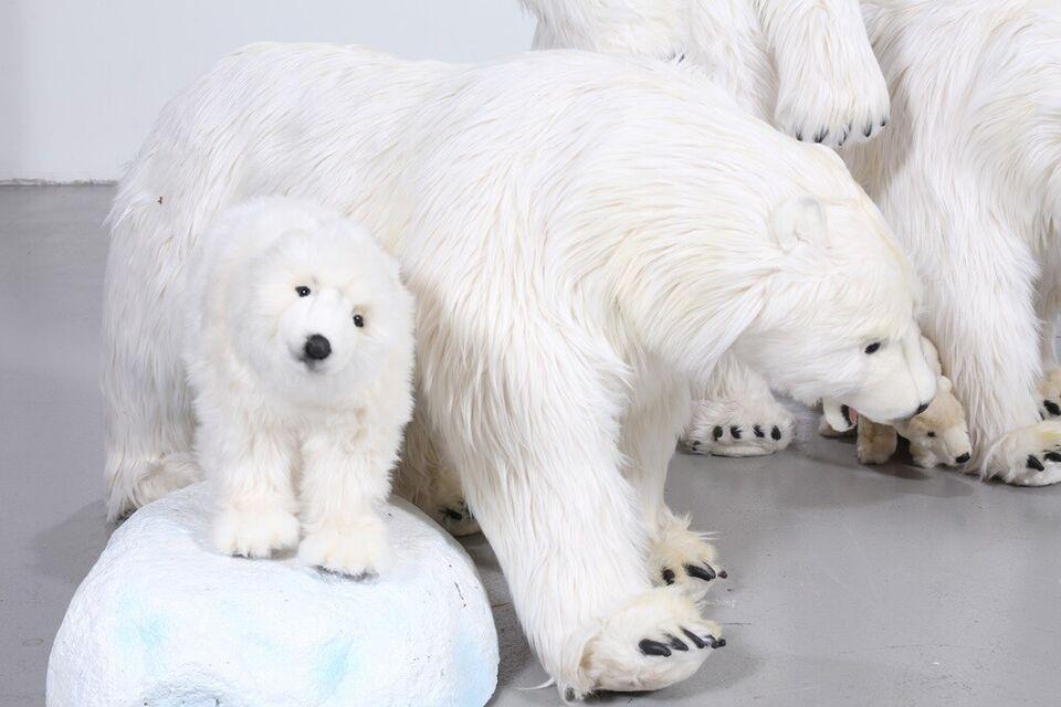Polardyr i plys, Hansatoy