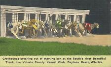 ag(W) The Volusia County Kennel Club, Daytona Beach, Florida