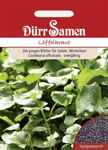 100 graines Dürr cuillère herbe dureté salade semences CA 0197