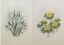 punto de cruz con Passepartout Stick envase 9x13 firmado flores Permin el bordado
