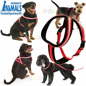 Dog-Harness-Reflective-Company-Of-Animals-8-Different-Sizes-COMFY-FOR-PET