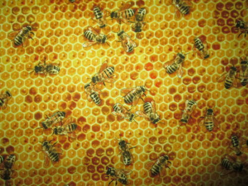 BEE HONEYCOMB BEES REALISTIC BUZZING YELLOW BLACK COTTON FABRIC BTHY