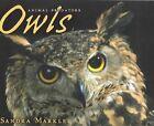 Owls by Sandra Markle (Paperback / softback, 2005)