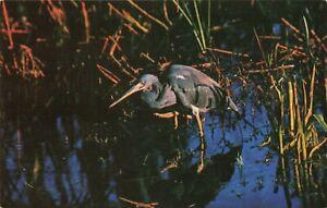 Postcard-Louisiana-Heron