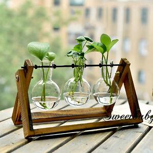 Wooden Stand Glass Terrarium Container Hydroponics Plant Planter
