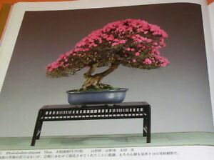 Very-Rare-The-85rd-Bonsai-Exhibition-book-from-japan-japanese-0670